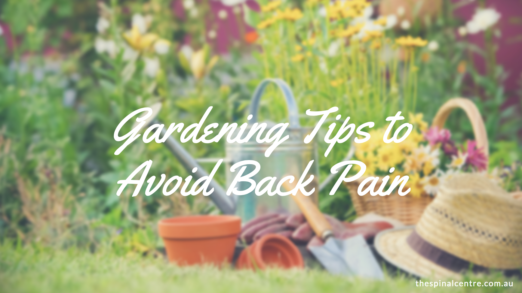 Chiropractic gardening tips for avoiding back pain the for Gardening 101 australia