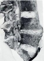 210.pic.5