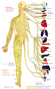 Your Nervous System Cover